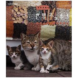 岩合光昭の世界ネコ歩き モロッコ・マラケシュ
