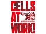 はたらく細胞 1BD