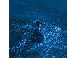 藍井エイル / 「流星/約束」 CD