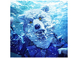 MAN WITH A MISSION/ INTO THE DEEP 初回生産限定盤