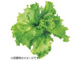 水耕栽培種子 レタス(グレートレイクス) 「GreenFarm」 UH-LA01