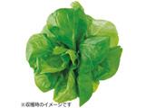 水耕栽培種子 サラダ菜 「GreenFarm」 UH-LA06