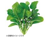 水耕栽培種子 ルッコラ 「GreenFarm」 UH-BC02